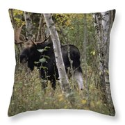 A Moose Alces Alces Americana With An Throw Pillow