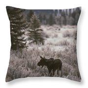 A Moose In A Frost-covered Field, Grand Throw Pillow