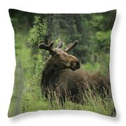 A Moose Stands In Tall Grass Throw Pillow
