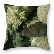 A Moray Eel Pokes Its Head Throw Pillow