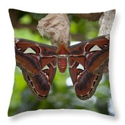 A Moth Clings To Its Cocoon Immediately Throw Pillow