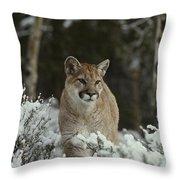 A Mountain Lion, Felis Concolor Throw Pillow