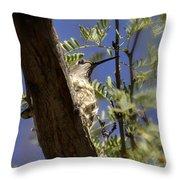 A Nesting Hummingbird Throw Pillow