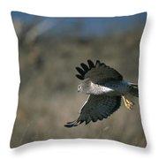 A Northern Harrier Hawk In Flight Throw Pillow