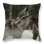 A Pack Of Gray Wolves, Canis Lupus Throw Pillow
