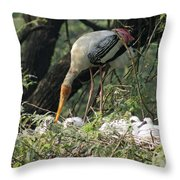 A Painted Stork Feeding Its Young At The Delhi Zoo Throw Pillow
