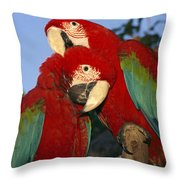 A Pair Of Captive Red-and-green Macaws Throw Pillow
