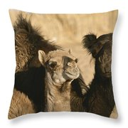 A Pair Of Dromedary Camels Pose Proudly Throw Pillow