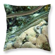 A Pair Of Trumpetfish Off The Coast Throw Pillow