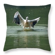 A Pelican Drying Its Wings After Landing In The Lake Inside Delhi Zoo Throw Pillow