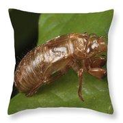 A Periodical Cicada Exoskeleton Throw Pillow