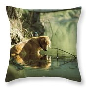 A Pet Dog Sits In The Shallow Water Throw Pillow