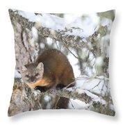 A Pine Marten Looks For Food Throw Pillow