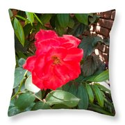 A Pink Rose Being Backlight With The Petals Looking Translucent Throw Pillow