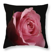 A Pink Rose Rosaceae Throw Pillow