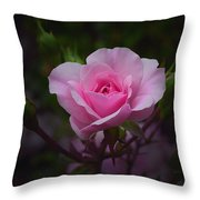 A Pink Rose Throw Pillow by Xueling Zou