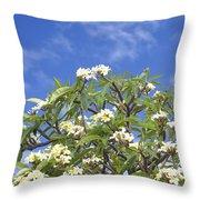 A Plumeria Caracasana Tree In Full Throw Pillow