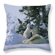 A Polar Bear Cub Plays With Its Resting Throw Pillow
