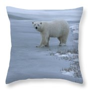 A Polar Bear Stepping Onto Ice Throw Pillow
