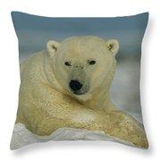 A Polar Bear, Ursus Maritimus, Lounges Throw Pillow