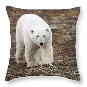A Polar Bear Ursus Maritimus Walking Throw Pillow