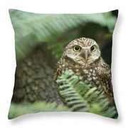 A Portrait Of A Captive Burrowing Owl Throw Pillow