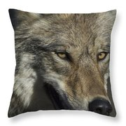 A Portrait Of A Gray Wolf Throw Pillow