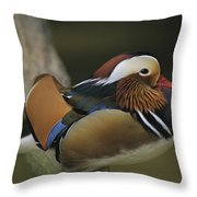 A Portrait Of A Mandarin Duck Throw Pillow