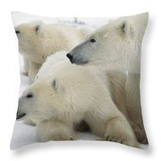 A Portrait Of A Polar Bear Mother Throw Pillow