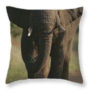A Portrait Of An African Elephant Throw Pillow