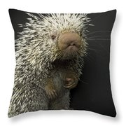 A Prehensile-tailed Porcupine Coendou Throw Pillow