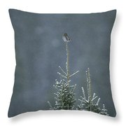 A Pygmy Owl Perched In The Top Of An Throw Pillow