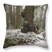 A Rare Snow Dusts The Trail Through Del Throw Pillow