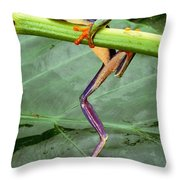 A Red-eyed Tree Frog, Agalychnis Throw Pillow