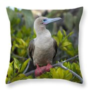 A Red-footed Booby Sula Sula Galapagos Throw Pillow