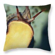 A Red Lip Triton Snail Charonia Throw Pillow