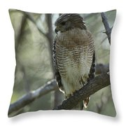 A Red Shouldered Hawk Perches In A Tree Throw Pillow