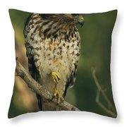 A Red Shouldered Hawk Perches On A Tree Throw Pillow