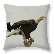 A Red Wing Black Bird Attacks A Bald Throw Pillow
