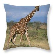 A Reticulated Giraffe On A Samburu Throw Pillow