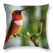 A Rufous Hummingbird Perched Throw Pillow
