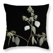 A Seeded Eucalyptus Eucalyptus Cinerea Throw Pillow