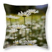 A Small Group Of Daisies Stands Throw Pillow