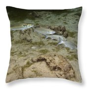 A Small School Of Grey Mullet Swim Throw Pillow