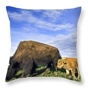 A Sow Bison Guides Her Calves On A Walk Throw Pillow