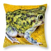 A Spadefoot Toad Throw Pillow