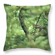 A Sparrowhawk Perches In A Tree Throw Pillow