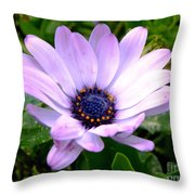 A Spider's Center Throw Pillow