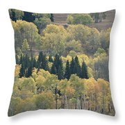A Stand Of Aspen And Evergreen Trees Throw Pillow
