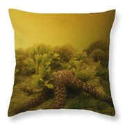 A Starfish In Waters Clouded By A Red Throw Pillow